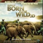 Born to be Wild 3D : Win a Private Screening