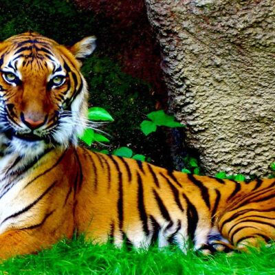 Photography Finds : The Beauty in a Tiger