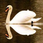 Home Spun Reflection Photography