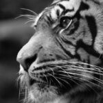 Beautiful Black and White Animal Photography