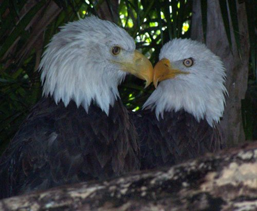 Two Eagles Photo