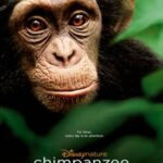 Disneynature Chimpanzee Releasing April 20, 2012