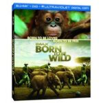 Born to Be Wild 3D on DVD : Blu-Ray Combo Pack Giveaway : (Ends 5/3)