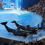 SeaWorld Orlando Wordless Wednesday