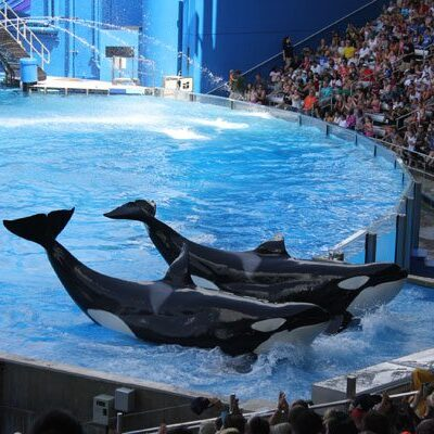 SeaWorld Orlando Wordless Wednesday