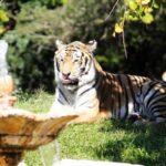 Photography: The Tiger
