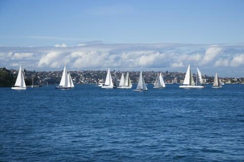 Sailboats, Sydney, Australia.