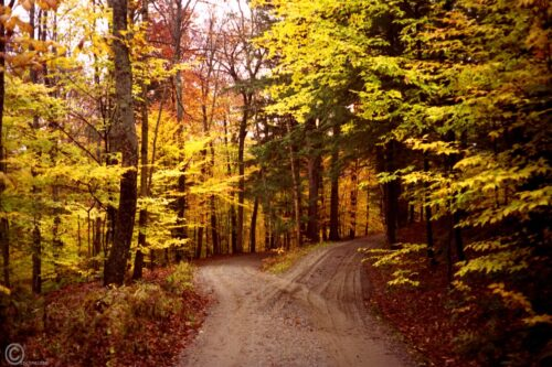 Two Roads in a Yellow Wood