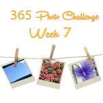 365 Photo Challenge : Week 7