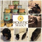 Make the Switch to a Grain-Free Pet Food Diet with Holistic Select