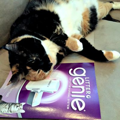 Litter Genie and Fancy Feast the Purrrrfect Combination