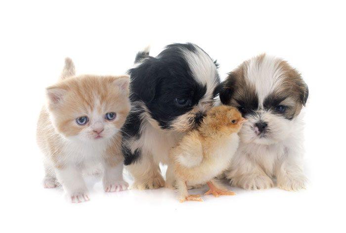 Spoil Your Pets
