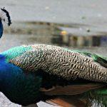 Wild Beauty : Palm Beach Zoo Series