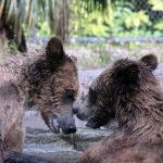 Palm Beach Zoo Series : Beary Friendly