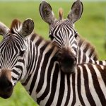 Safari Wilderness Coupon for Florida Residents