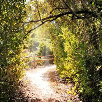 Best Trails in Miami to See Nature