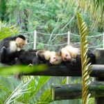 Palm Beach Zoo April 2019 Special Events