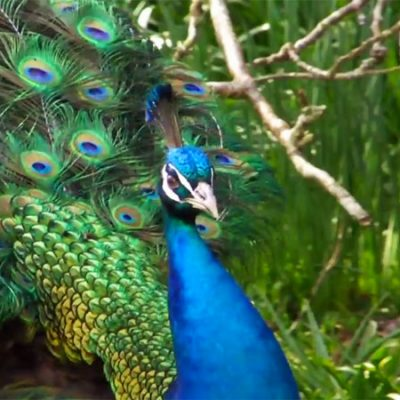 Free Admission to the Palm Beach Zoo