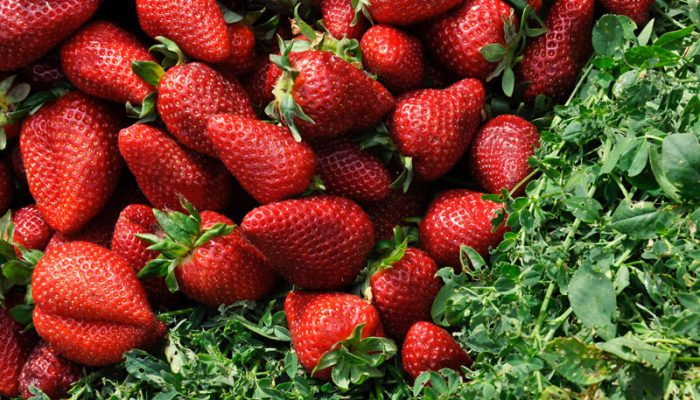 Summer Fruits and Vegetables and Their Health Benefits