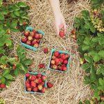 Smart Gardening (Gardening on a Budget)