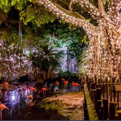 Zoo Lights at the Palm Beach Zoo