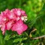 Beauty in Bloom: 5 Best Plants to Grow in Your Garden