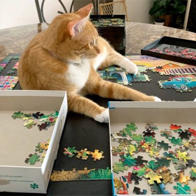 How do you keep cats off puzzles?