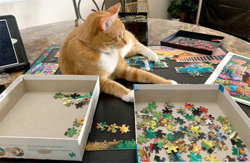 Keep cats off puzzles